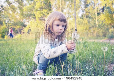 Funny Little Girl, With Serious Face, Is Looking At A Dandelion