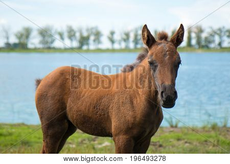 A young foal at the pond looks curiously at the frame