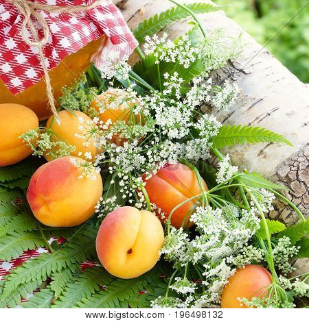 Apricots. Summer still life. A jar of apricot jam and ripe fruit. Forest flowers.