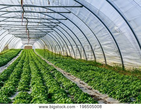 Glasshouse in agriculture with green plant and vegetables