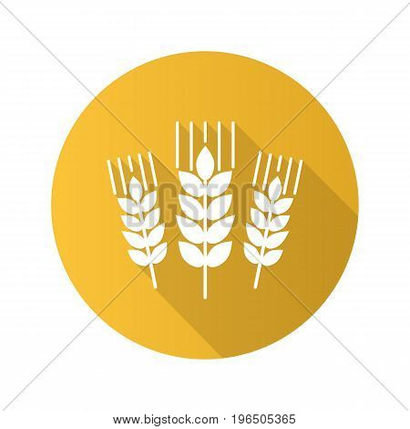Wheat ears flat design long shadow glyph icon. Barley. Spikes of rye. Vector silhouette illustration