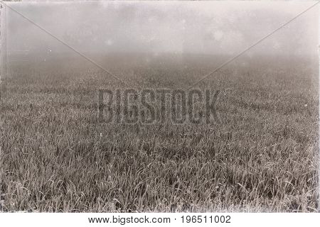 Old Black And White Photo Of Field Of Grass In Dense Mist.