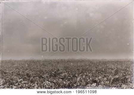 Old Black And White Photo Of Agricultural Land In Fog.