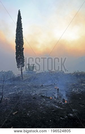 Zrnovnica Split Croatia - July 17 2017: Cypress tree standing on the rubble after the massive wildfire burning down the forest and villages around city Split