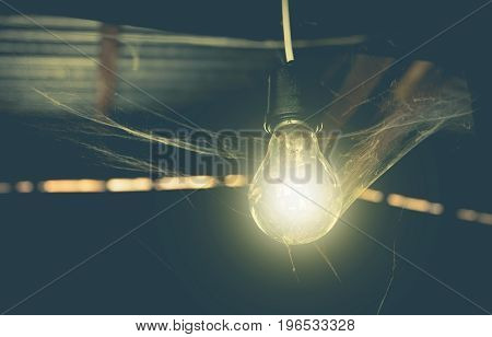 Hanging light bulbs with glowing one and web spider. Idea and creativity concept with light bulbs.
