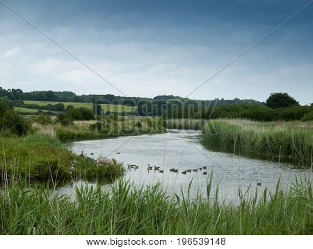 An English River Scene Landscape Lake With Ducks And A Sheep Grazing