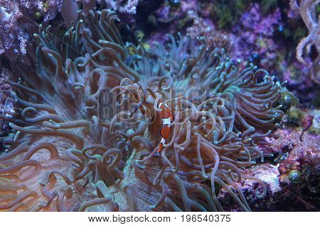 Seabed full of life with fish algae and coral suitably as a background or abstract