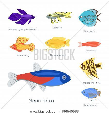 Exotic tropical fish different colors underwater ocean species aquatic nature flat isolated vector illustration. Decorative wildlife cartoon fauna aquarium water marine life.