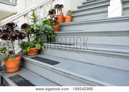 Flowers in pot on the wooden steps of a house entrance.