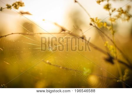 Silhouette of little spider in his web on sunset with selective focus on abstract background