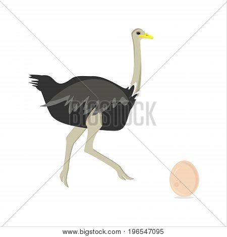 Ostrich Bird Vector