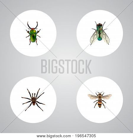 Realistic Insect, Wasp, Arachnid And Other Vector Elements