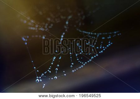 Web with drops of water rain beautiful summer background