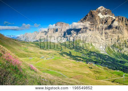 Amazing colorful alpine flowers Grindelwald Bernese Oberland Switzerland Europe