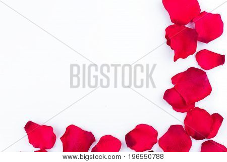 Frame of artificial rose petals on the white background