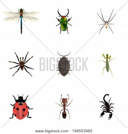 Realistic Grasshopper, Arachnid, Damselfly And Other Vector Elements