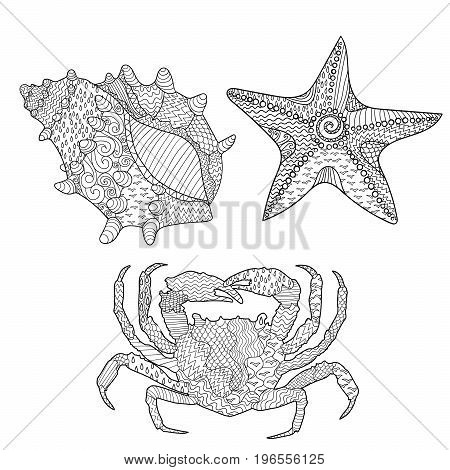 Set of marine objects - seashell, seastar and crab. Adult antistress coloring page. Sketch for tattoo, poster, print, t-shirt in zentangle style. Vector illustration.