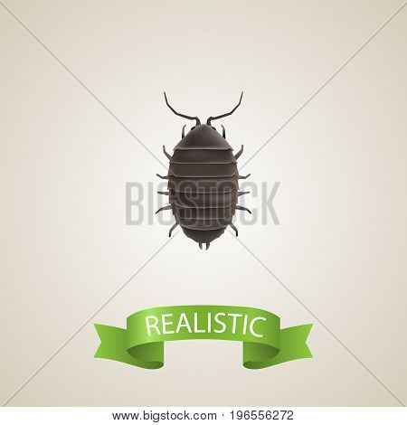 Realistic Bug Element. Vector Illustration Of Realistic Dor Isolated On Clean Background