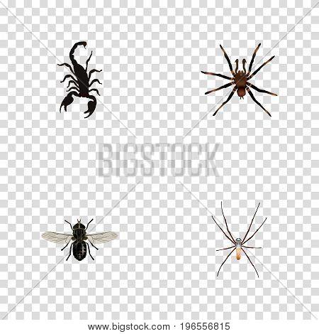 Realistic Poisonous, Arachnid, Midge And Other Vector Elements
