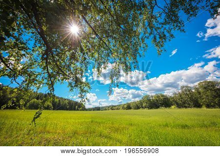 Summer background concept landscape; field; sun rays through the tree crown; blue sky; white clouds