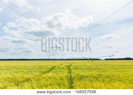 Field of wheat watering system Russia village Tambov region summer