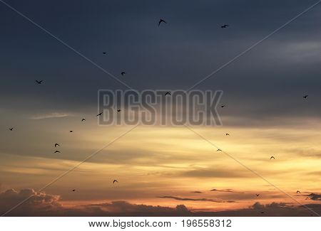 flock of birds in yellow sky before sunset in evening