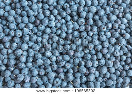 Food background with berries blueberries. Blueberries are scattered on the surface. Forest berry blueberries. Growing in a swamp in the middle lane. Used in medicine, food and confectionary industries.