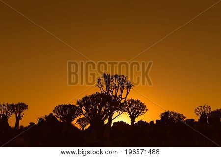 Sunset view of quiver tree forest at Garas Park Rest Camp near Keetmanshoop on the B1-road to Mariental