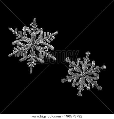 Set of two monochrome snowflakes isolated on black background. Macro photo of real snow crystals: large stellar dendrites with volume surface details and long, elegant arms with side branches.