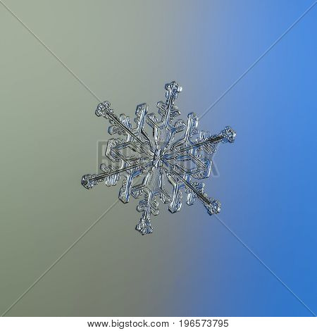 Real snowflake macro photo: medium size snow crystal of stellar dendrite type with glossy surface and six long, elegant arms with side branches. Snowflake glittering on smooth gray - blue background.