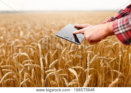 Smart farming using modern technologies in agriculture. Man agronomist farmer touches and swipes the app on digital tablet computer in wheat field
