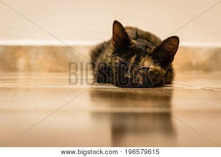 closeup of tabby kitten sleeping on floor