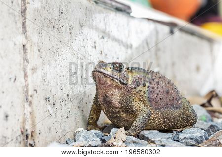 Toads are amphibians poisonous toxins and hideous ugly skin. Toad is hiding in the corner.;