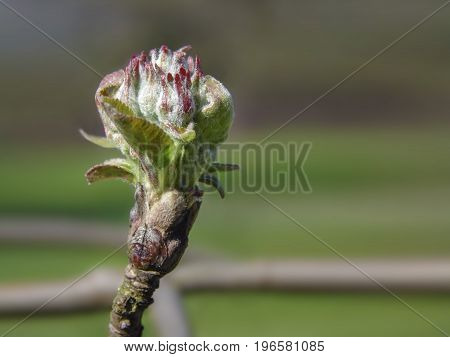 Little growing bud of a plant on a blured background