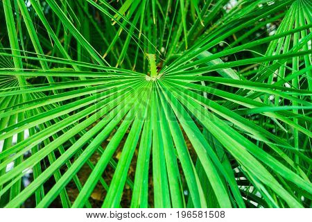 Round spiky palm leaf in tropical forest green foliage background summer vacation seaside ocean relax inspirational text ready