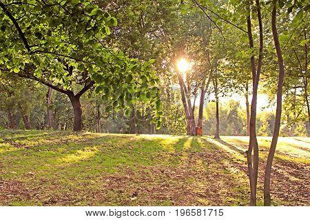 Sunset in the park in Kyiv, Ukraine