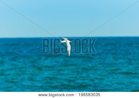 White bird seagull flying over turquoise sea spread wings clear blue sky. horizon summer freedom inspirational