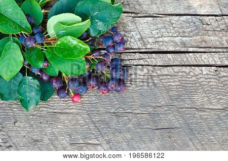 The branches of the Saskatoon berries on a dark wooden background