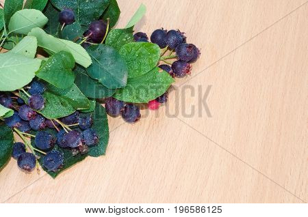 The branches of the Saskatoon berries on a light wooden background