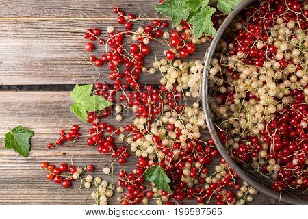 Red currant on a wooden table. View from above
