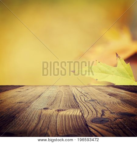 autumn background, fall leaf concept