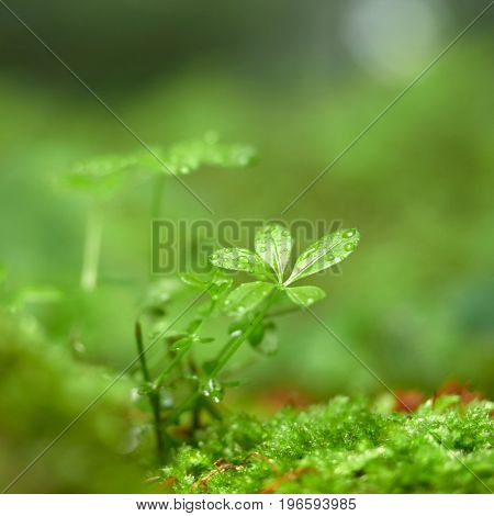 rain drops on the leaves of forest plants
