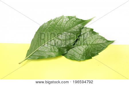 Green leaf on white and yellow background