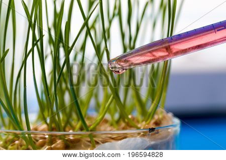 Experiments with plants in the laboratory