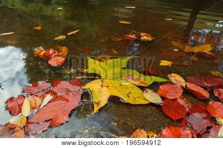 Autumn background with leaves in a puddle