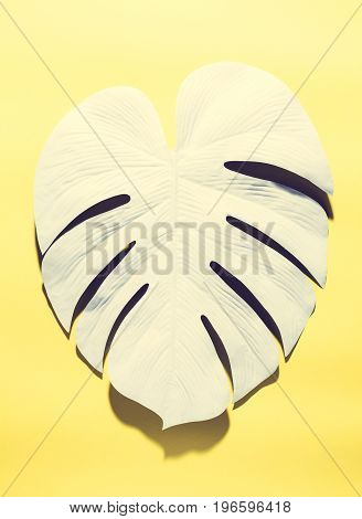 Painted tropical monstera leaf with hard shadow on a yellow background