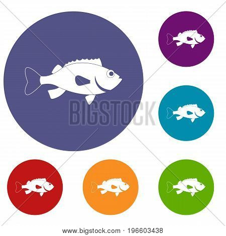 Sea bass fish icons set in flat circle red, blue and green color for web