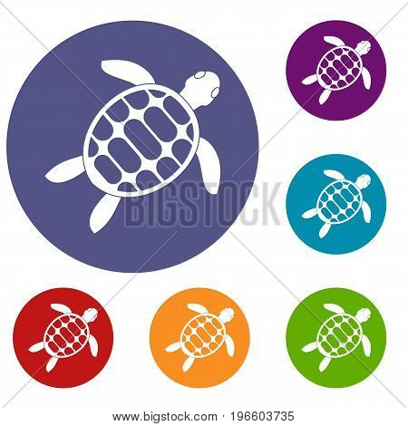 Turtle icons set in flat circle red, blue and green color for web