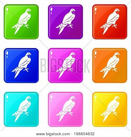 Falcon icons of 9 color set isolated vector illustration