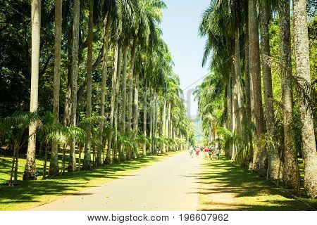 Palm alley tropical park on Sri Lanka
